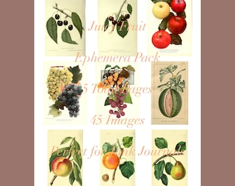 Juicy Fruit DIGITAL Ephemera Pack - 45 images