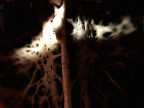 """SLENDER FUNGUS--- one of a kind, original photo transferred to lightweight, smooth, reflective metal (no duplicates made) 16 x 20"""" goth art"""
