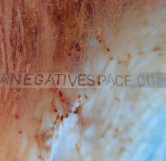 "SKIN VISION--- original, one of a kind photo transferred to metal 12""x12"" no duplicates ever made abstract wall art"