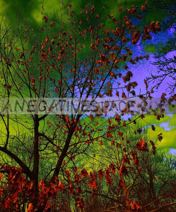 """INBETWEEN DAYS--- original photo transferred to thin, lightweight, reflective metal  20""""H x 16""""W one of a kind, no duplicates made"""