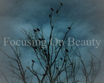 Crow Photography / Download Blue Art / Crow Pictures / Blue Wall Art / Crow Art Print / Blue Artwork / Digital Photography / Tree Photos