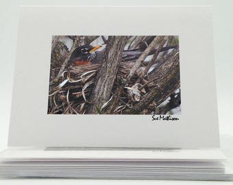 Boxed Blank Notecards: Robin Set of 6