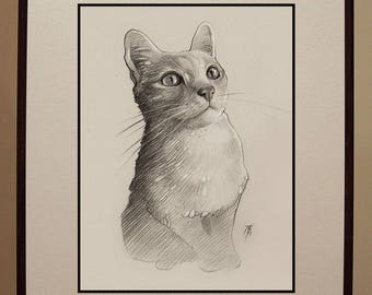 Custom graphite pencil pet portrait.
