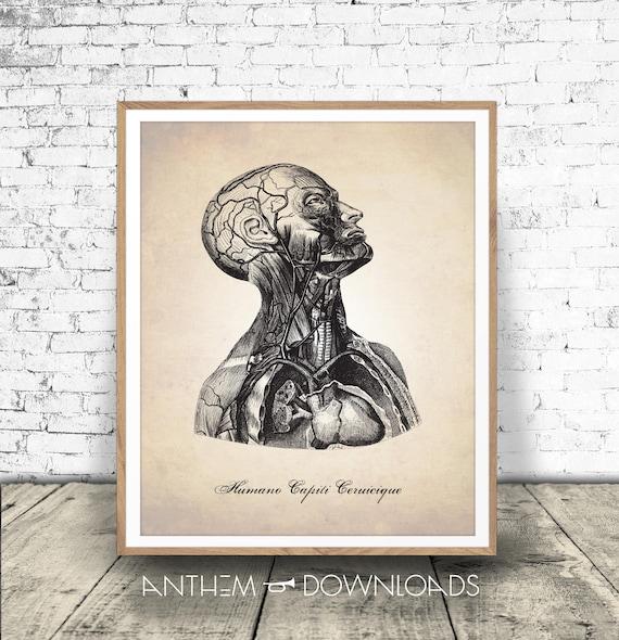 Kopf und Hals herunterladen medizinische Illustration | Etsy