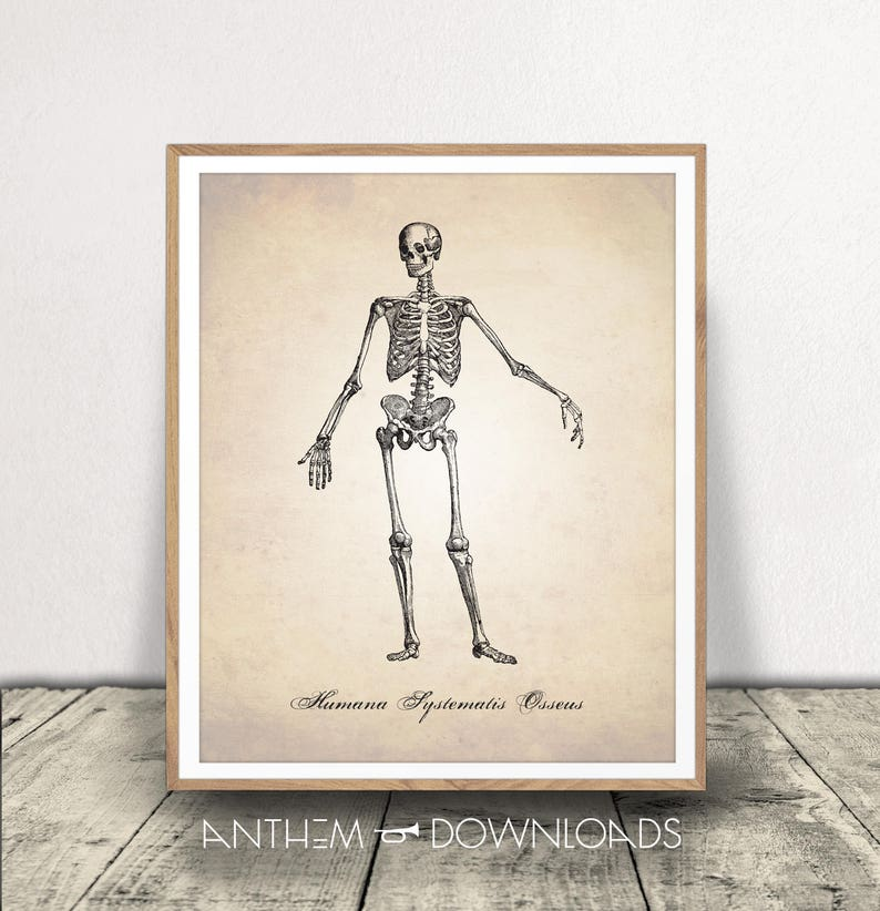 picture about Printable Skeletal System identify Skeletal Course of action PRINTABLE, Human Anatomy Artwork Print, Human Anatomy Print, Skeleton Print, Skeletal Course of action, Human Skeleton, Anatomy Obtain