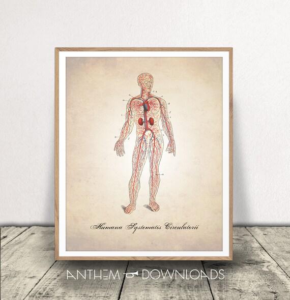 Herz-Kreislauf-System bedruckbar menschliche Anatomie   Etsy
