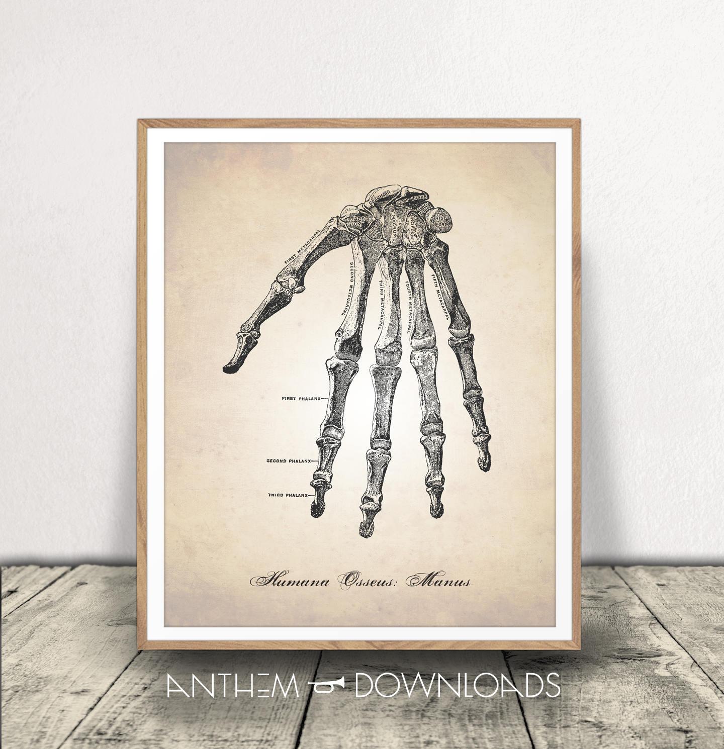Human Anatomy Printable Hand Anatomy Human Hand Human Etsy