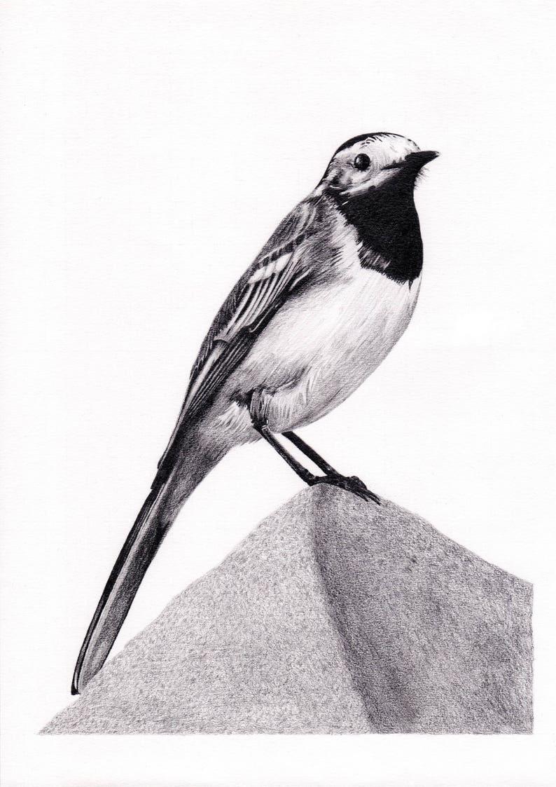 Cyfrowy Wall Art Druku Pliszka Ptak Rysunek Ołówkiem Etsy