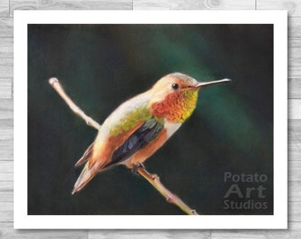 "Hummingbird Print (""Buzz"") Giclee Print Multiple Sizes Available 5x7 | 8x10"
