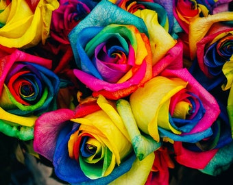 Rainbow Roses, Botanical Photography, All profits donated to TheirForeverHome.org