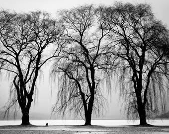 3 Trees, Botanical Photography, All profits donated to TheirForeverHome.org