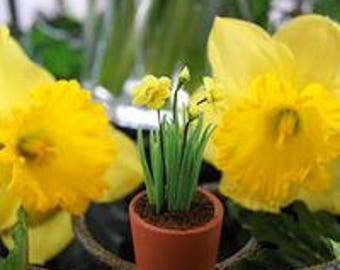 Miniature flowers, Daffodils in Clay Pot 1:12 Scale, miniature flowers, dollhouse flowers, miniature daffodils, dollhouse daffodils