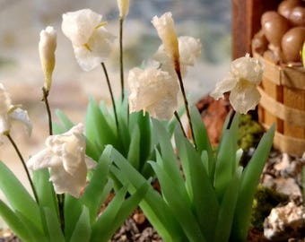 Miniature Flowers, Bearded Iris's 1:12 Scale Miniature Dollhouse Flowers-Any Variety available