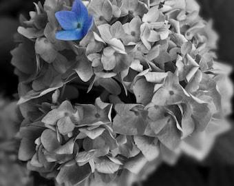 Hydrangea (Selective Color)