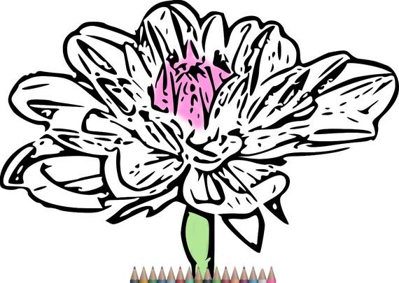 Adultos para colorear páginas página de flor para colorear | Etsy