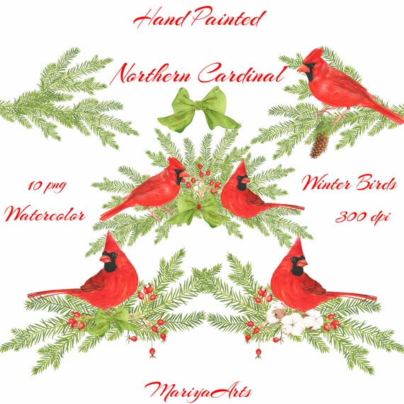 Northern Cardinal Watercolor Clipart Winter Birds ...