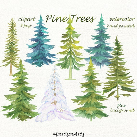 Watercolour Christmas Tree: Pine Trees Watercolor Clipart Conifer Trees Clip Art