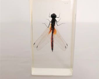 resin insect inclusion kind of Dragonfly vintage cabinet of curiosities