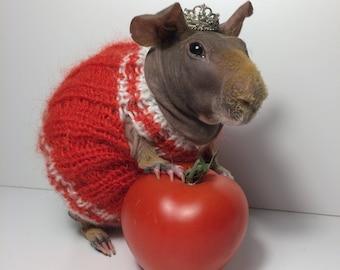 guinea pig dresses