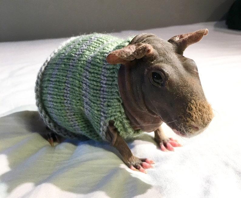 Guinea pig dress