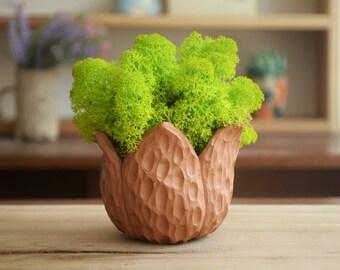 Succulent planter. succulent pot. Cactus planter. Tiny planter.