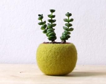 Felt succulent terrarium / felted planter felt bowl / Succulent pod / olive green / minimalit design