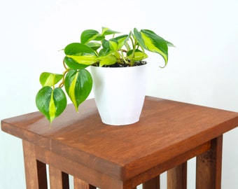 Philodendron Brasil Air Purifying Indoor Plant- Live Houseplant - Easy Care, Housewarming gift, Birthday Present, Gardening, dorm decor