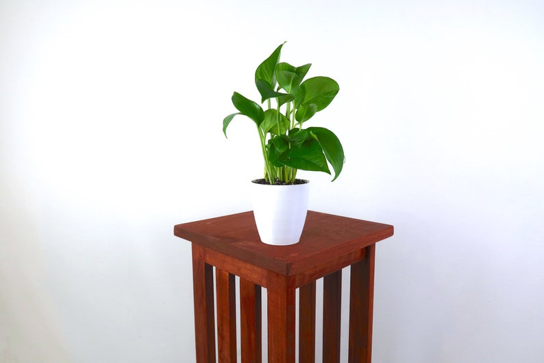 Golden Pothos Devil's Ivy Air Purifying Plant  Easy image 0