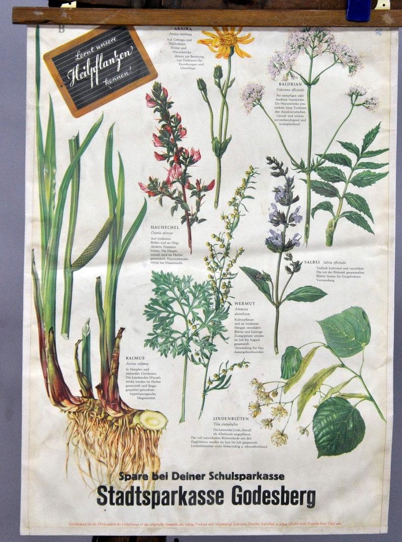 botanic poster wall chart print healing officinal plants