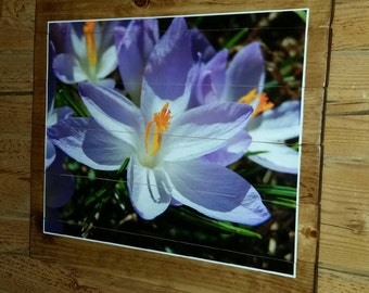 Folk art spring crocuses