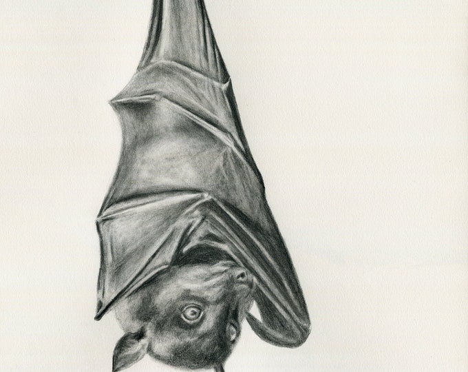 Bat. Flying Fox. Australian native animal. Bat, Australian. Bat lovers gift. Graphite drawing print. Bat print, bat gift.