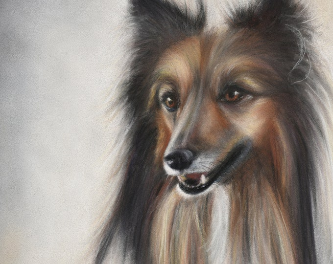 Sheltie Dog Art Archival Print. Soft and detailed, realistic dog art - Sheltie gift, Sheltie Collie portrait. Sheltie gift.