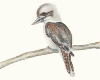 Australian Laughing Kookaburra. Kookaburra Australian Bird Art Print. Great gift for Dad this Christmas!