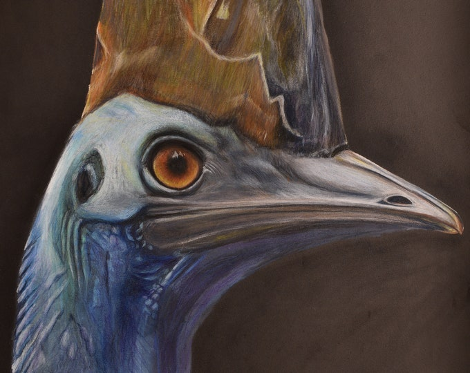 Cassowary - Australian Bird - bird art drawing print. Blue cassowary painting for your home!