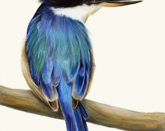 Blue Australian Kingfisher. Beautiful bird art, superior print. Dad gift Christmas. Kingfisher wall art, great gift for Mum.