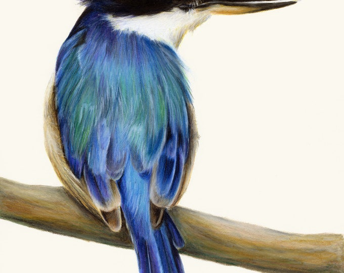 Kingfisher Australian Bird Art Print. Exceptional print. Great gift for bird lover. Great blue home decor, wall decor. Living room art. Blue