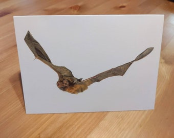 Bat Art Greeting Card Australian Animal Greeting Card