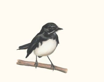 Willie Wagtail - Great Christmas Gift.  Australian Bird Wildlife Art, unique gift for your loved one who just loves birds and bird art.