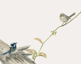 Australian bird art - Blue fairy wrens, superb blue wrens 'Wrens on a Vine' botanic Australian animal watercolour art by Rachael Curry