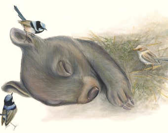 LIMITED EDITION PRINT. Sleepy Wombat. Cuddly, sweet sleeping wombat with blue wren. Australian animal, pencil, watercolour print.