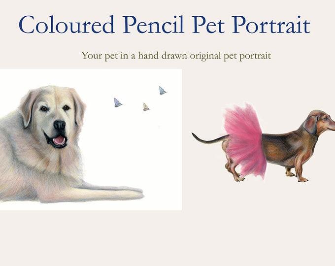 Commission pet portrait. Pet portrait of any pet. Horse, dog, cat, lizard, bird, fish. Email me a photo.