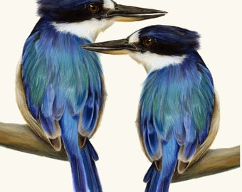 Two Kingfishers Australian Bird Art Print. Exceptional print. Beautiful birds gift. Great blue home decor, wall decor. Living room art. Blue