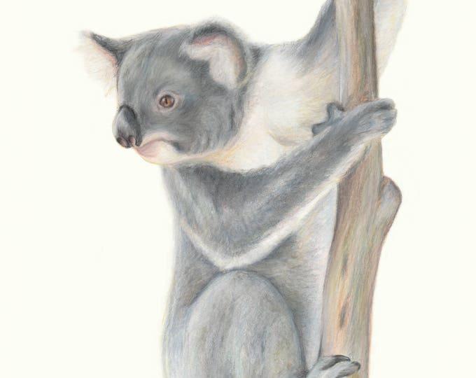 Koala! Koalas, our iconic Australian animal. Fine art print,  domestic shipping. Fantastic Australian gift for friends, family overseas.
