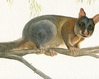 Possum. Australian native animal. Australian Brush Tailed Possum. Cute animal print. Watercolour art print. Possum gift. Possum print. Cute.