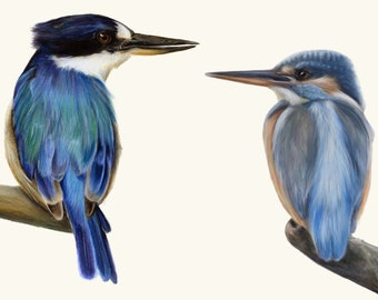 Two Kingfishers- Forest Kingfisher from Australia and European Kingfisher. Great blue home decor, wall decor. Living room art. Blue