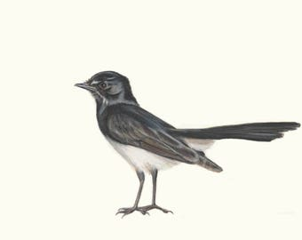 Willie Wagtail 2 - Australian Bird Wall Art - Special gift for dad. Exceptional quality print of Wagtail drawing. Bird gift, black and white