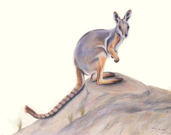 Yellow Footed Rock Wallaby - Kangaroo, Australian, Drawing, Art, Animal art, great Christmas Gift.  Gift for Dad, gift for Mum. Teacher gift