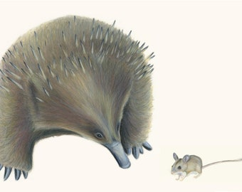 Cute Echidna talks to Spinifex Hopping Mouse