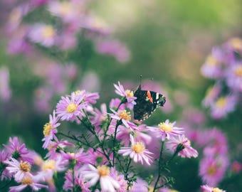 Autumn flowers photography, Meadow print, Nature Photography, Butterfly Print, Wild flowers Print, Fine art Print, Purple flower wall decor