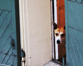 Peek-a-boo Pup in New Orleans, Louisiana, Color Photography, Mardi Gras, Bourbon Street, French Quarter in New Orleans
